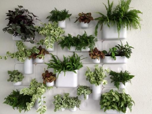 To attach plants on the wall